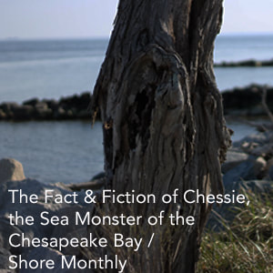 Chessie the Sea Monster Feature Link